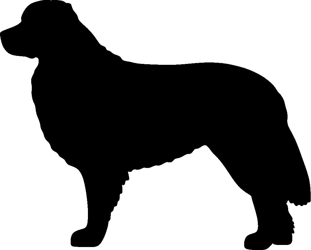 Berninpaimenkoira