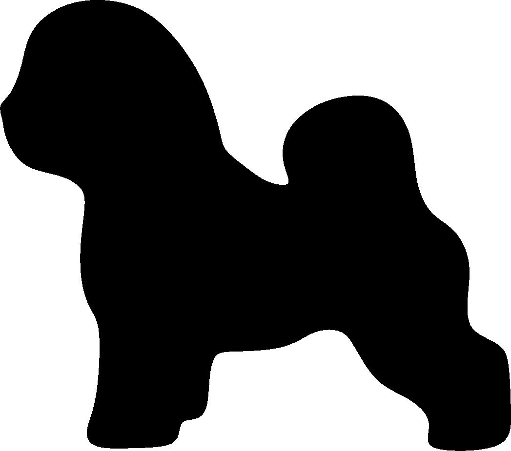 Bichon Frisé