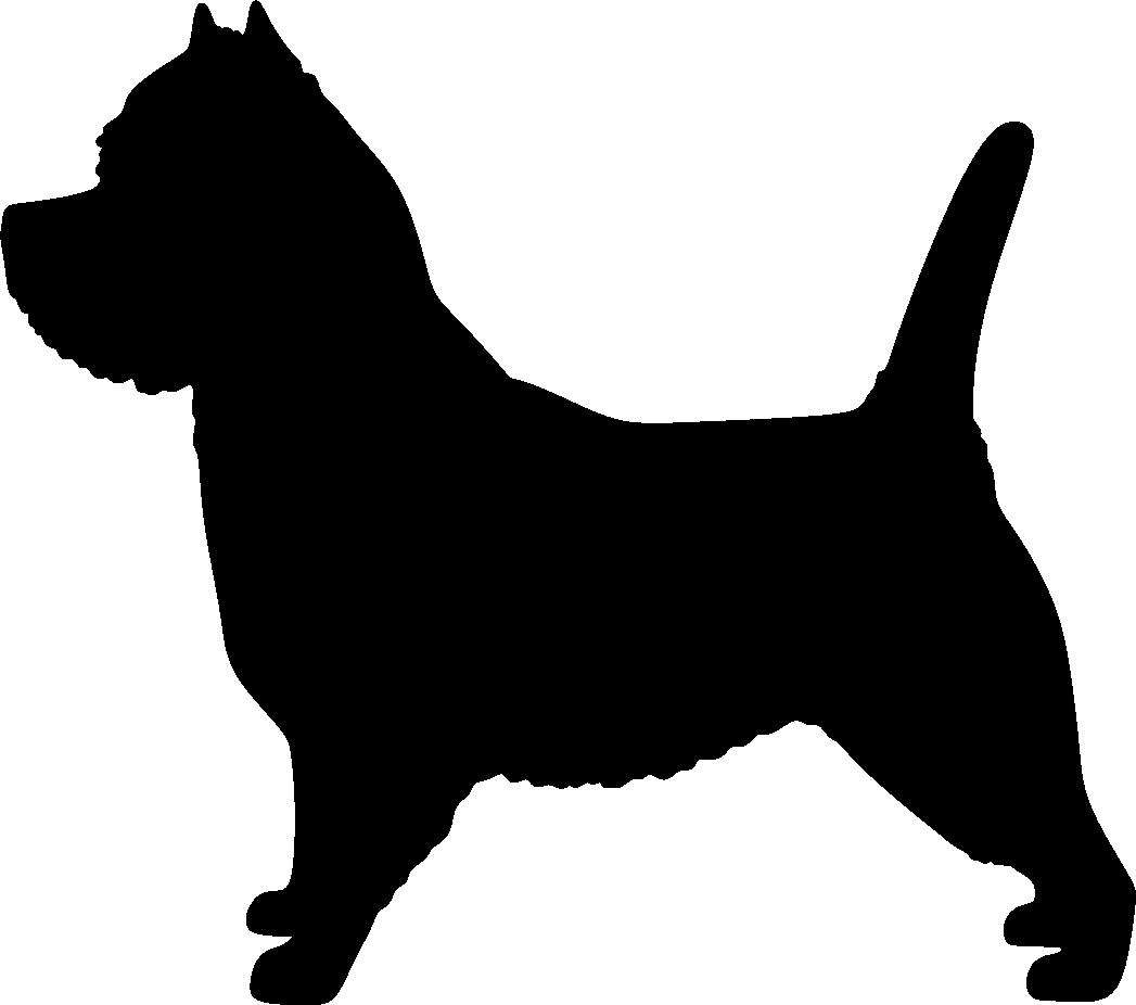 Cairnterrieri