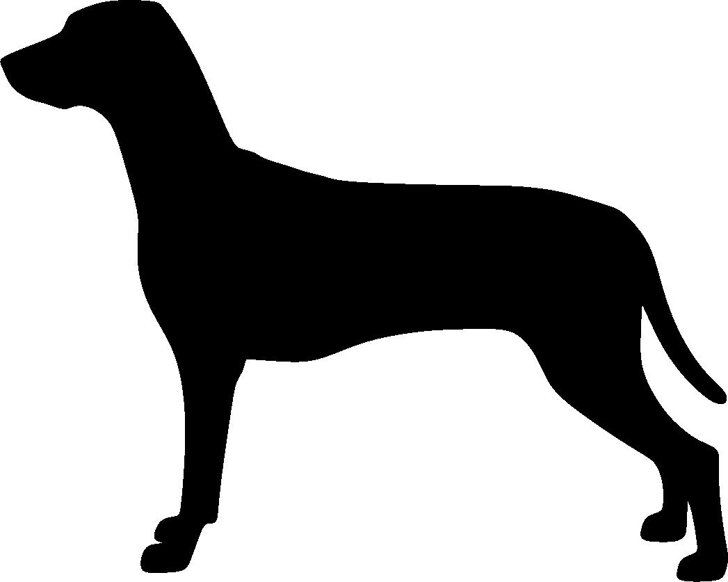 Dalmatiankoira