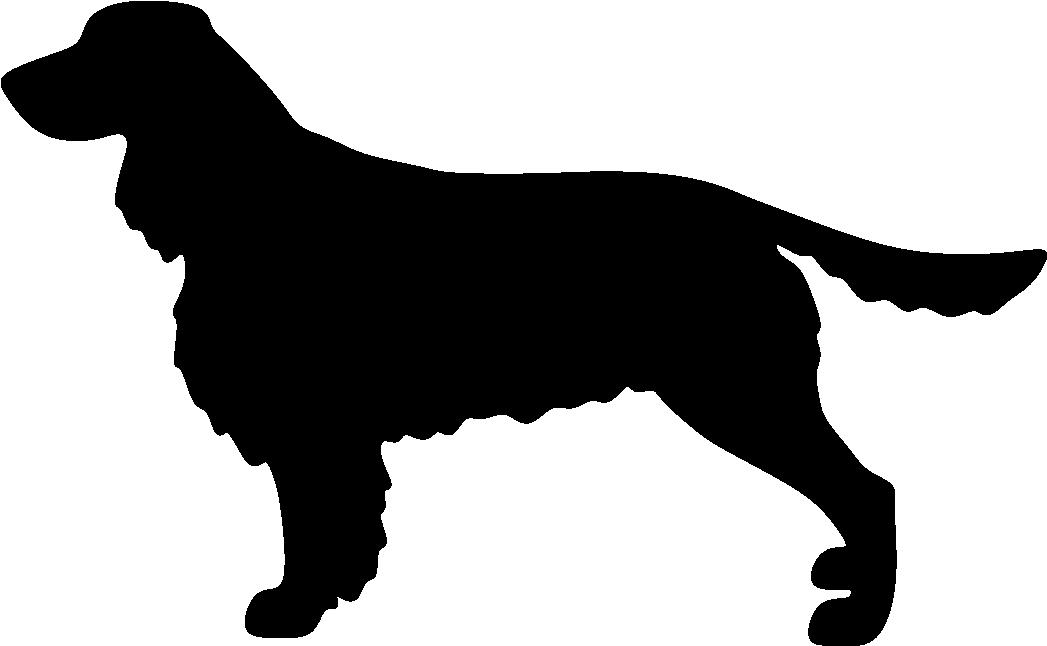 Englanninspringerspanieli