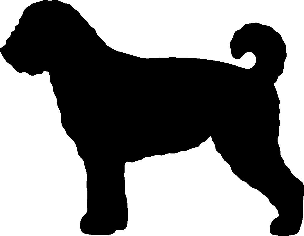 Espanjanvesikoira