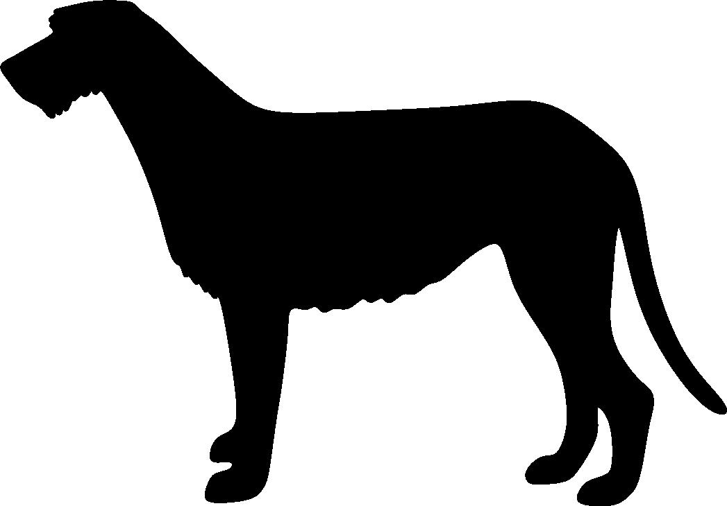 Irlanninsusikoira
