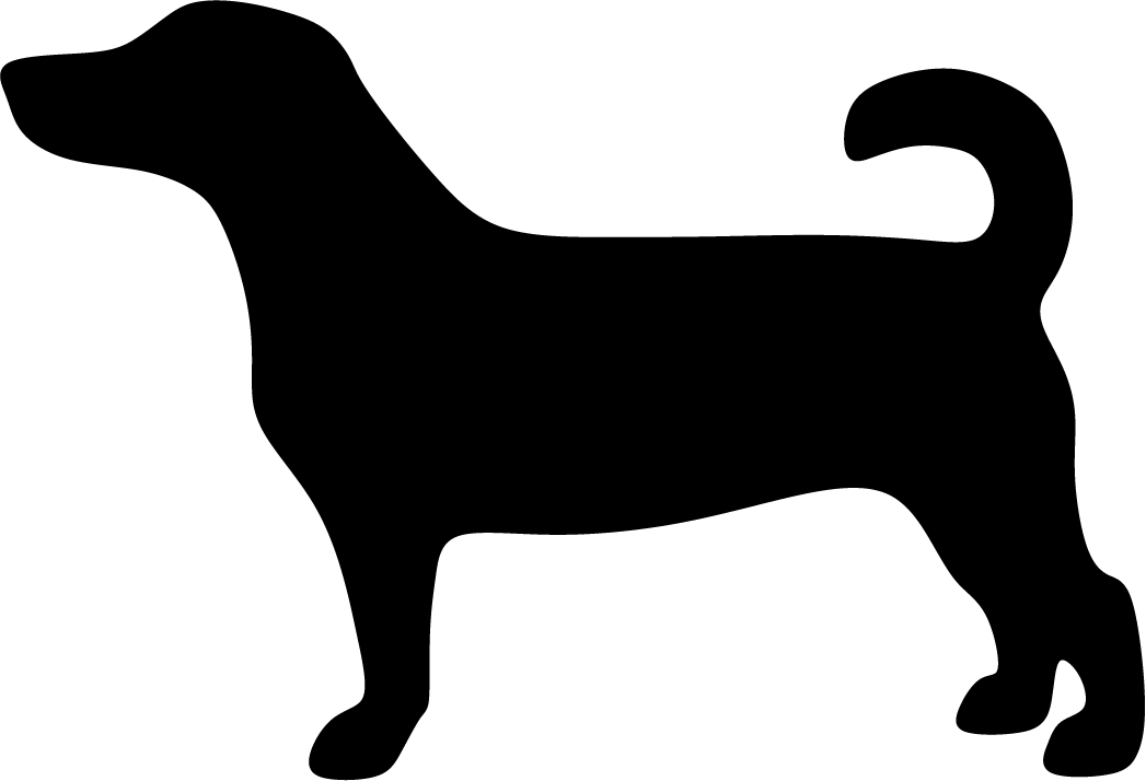 Jackrusselinterrieri