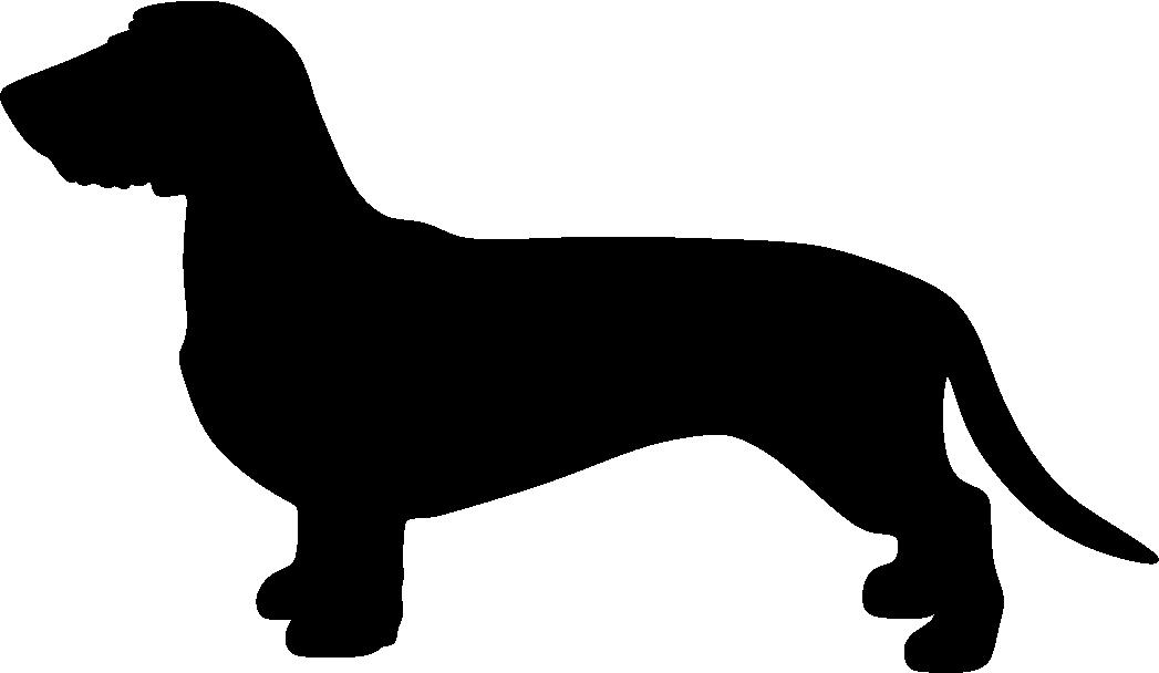 Mäyräkoira, KK