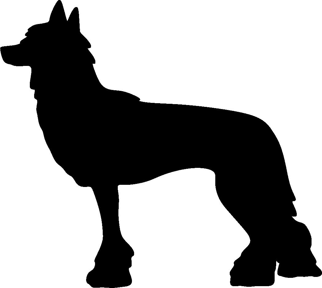 Kiinanharjakoira
