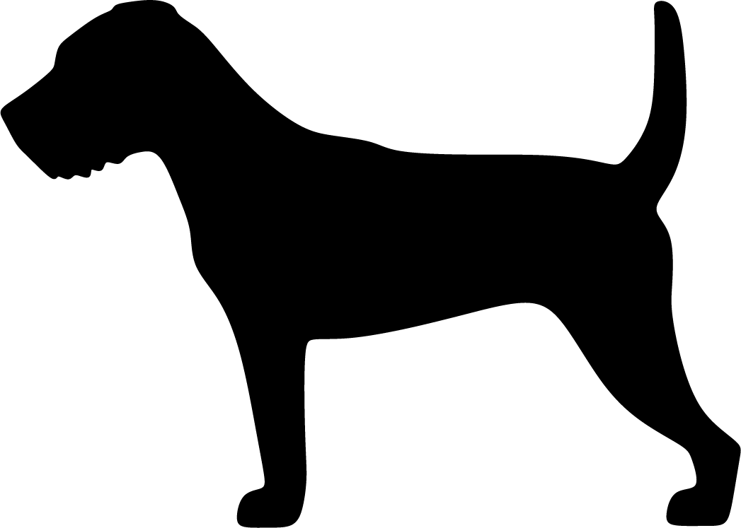 Parsonrussellinterrieri