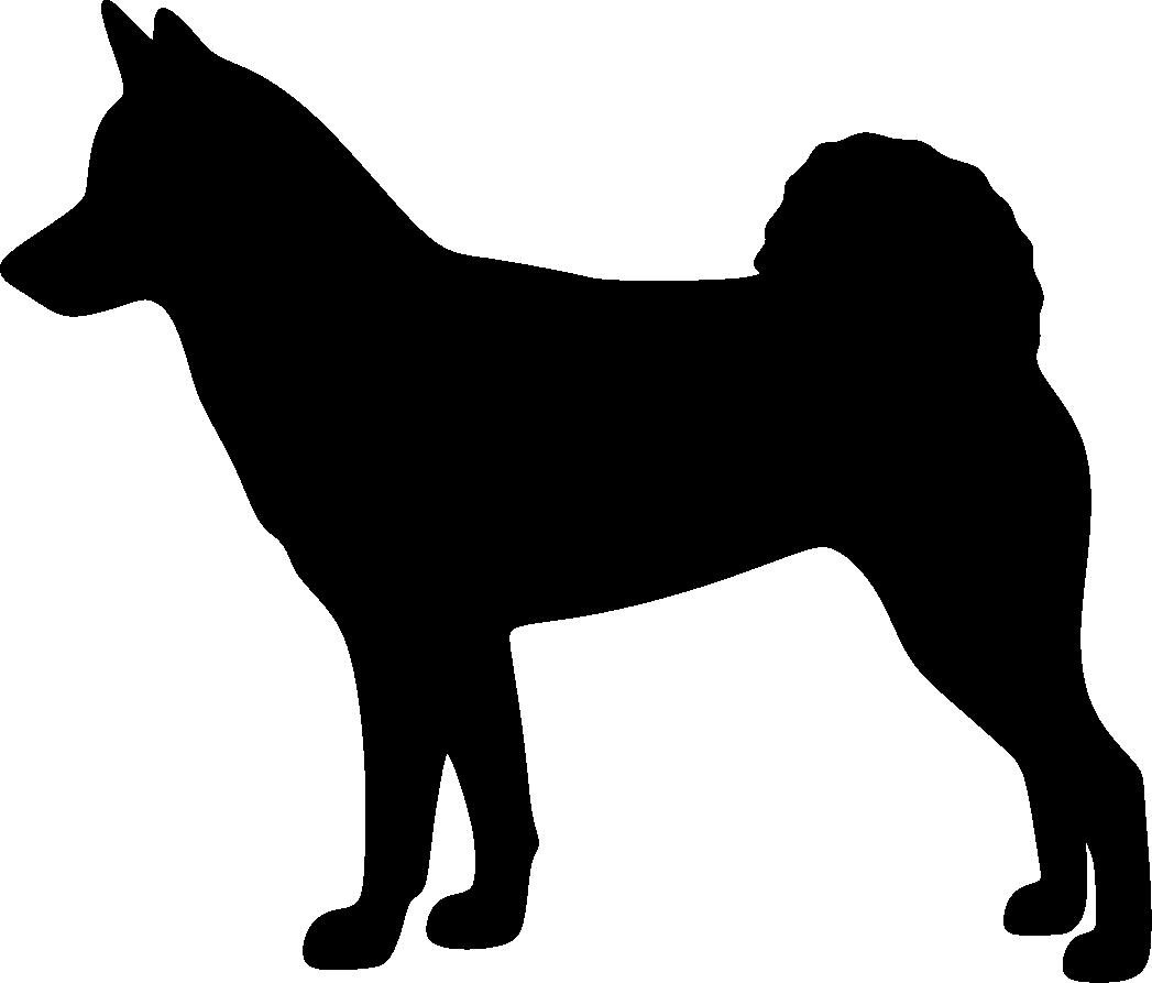Pohjanpystykorva