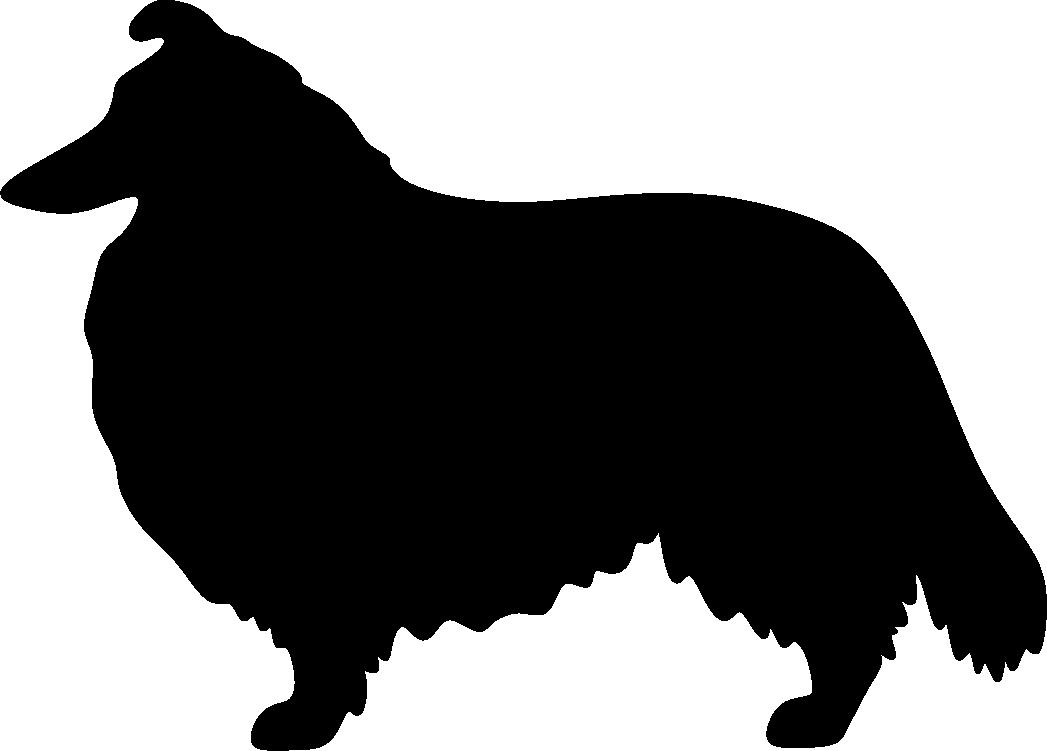 Shetlanninlammaskoira