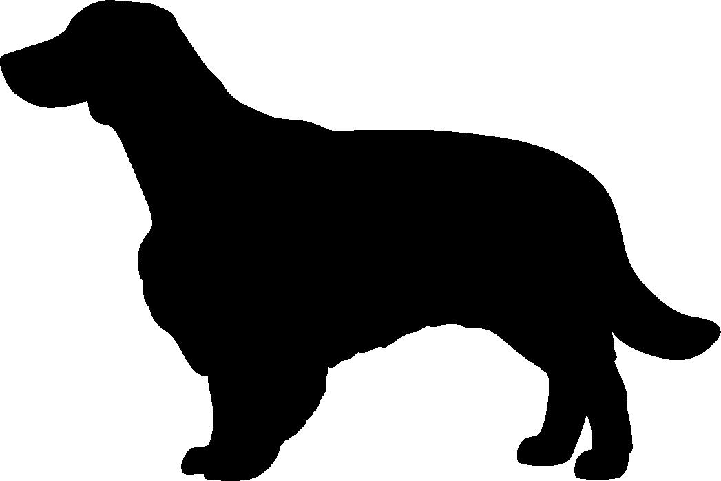 Walesinspringerspanieli