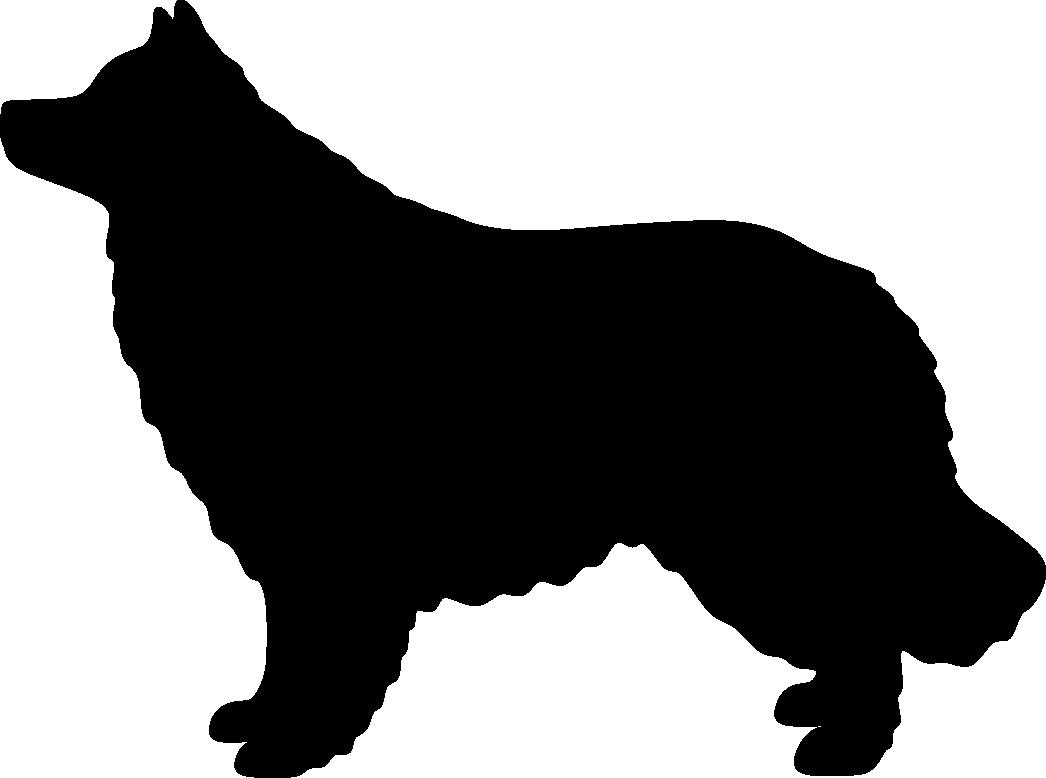 Paimensukuinen lapinkoira