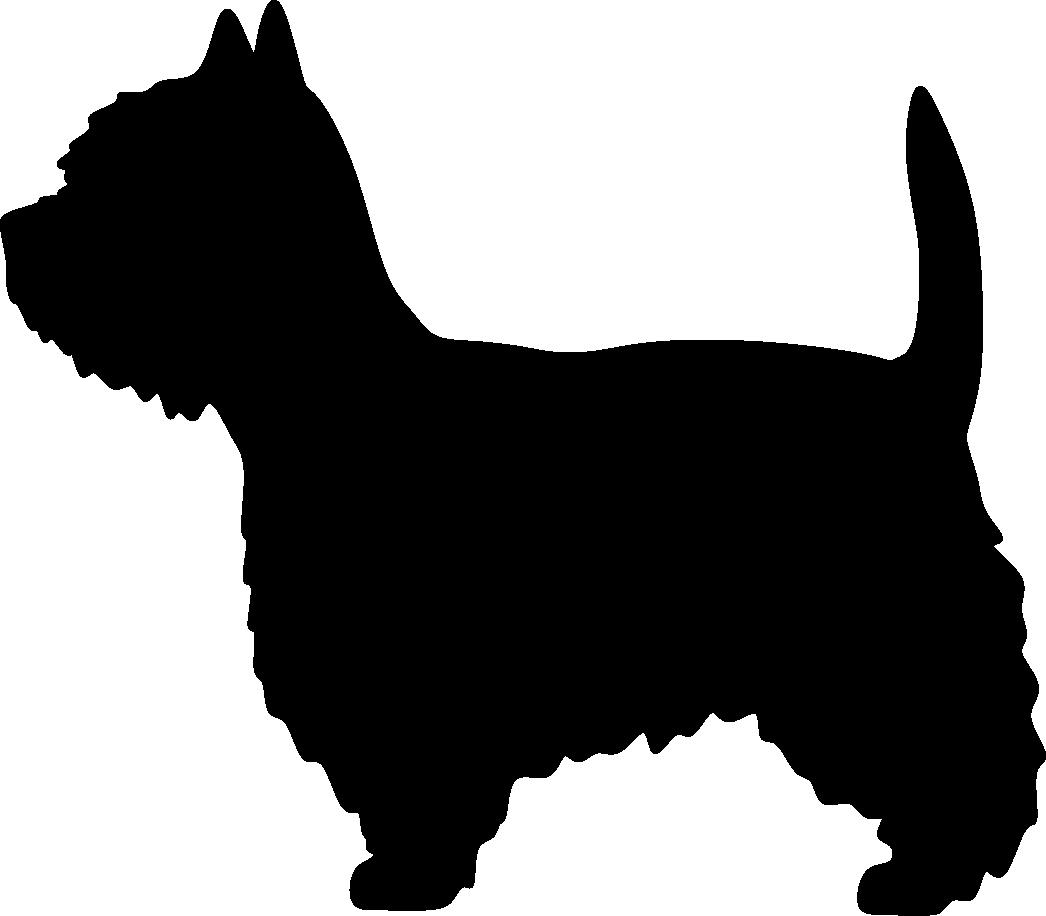 Valkoinen länsiylämaanterrieri