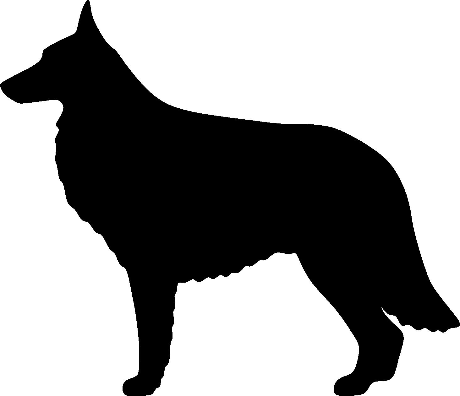 Belgianpaimenkoira, PK