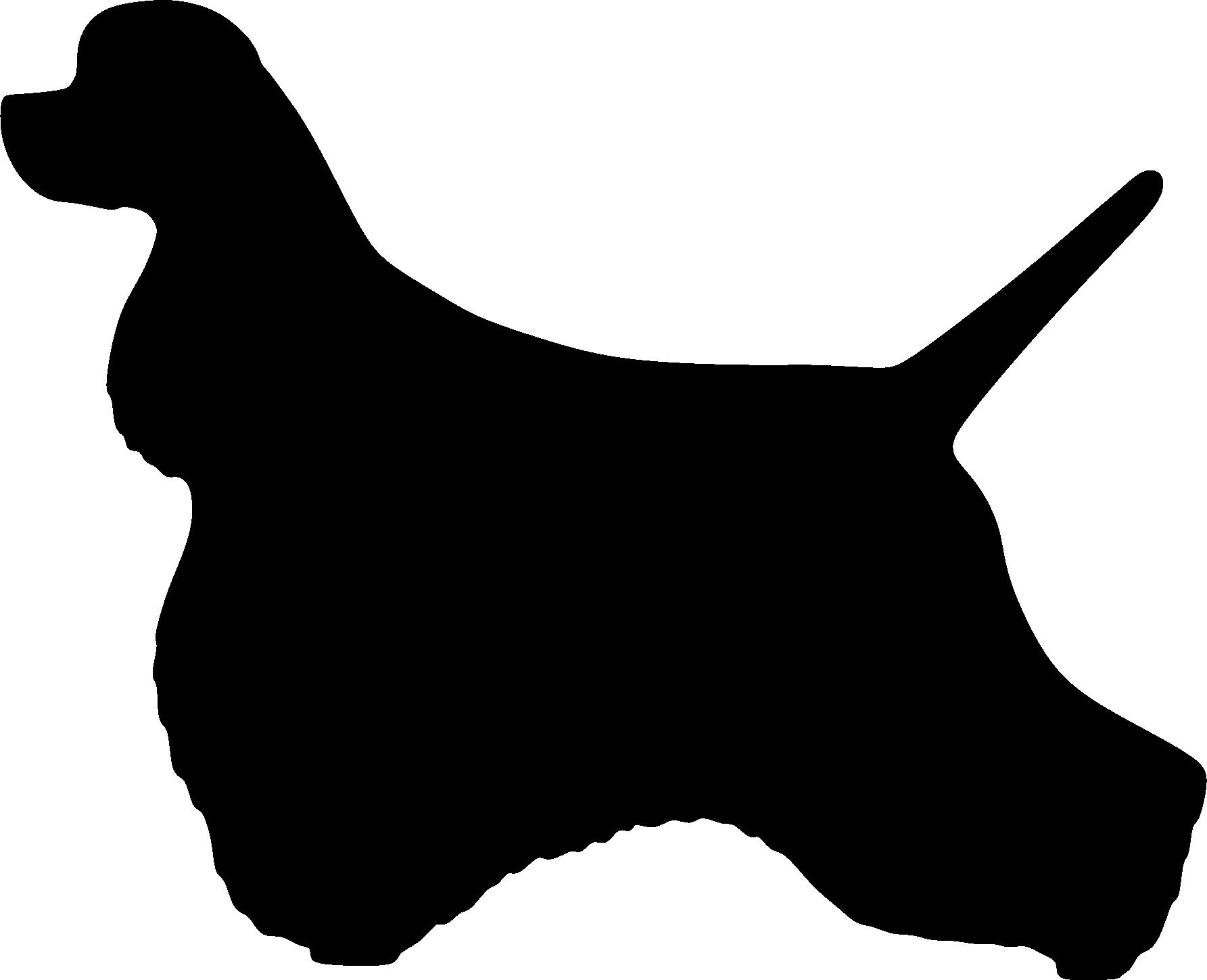 Amerikancockerspanieli