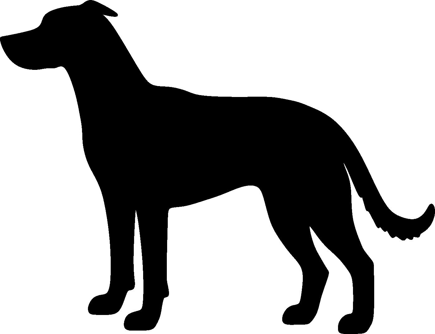 X-rotuinen