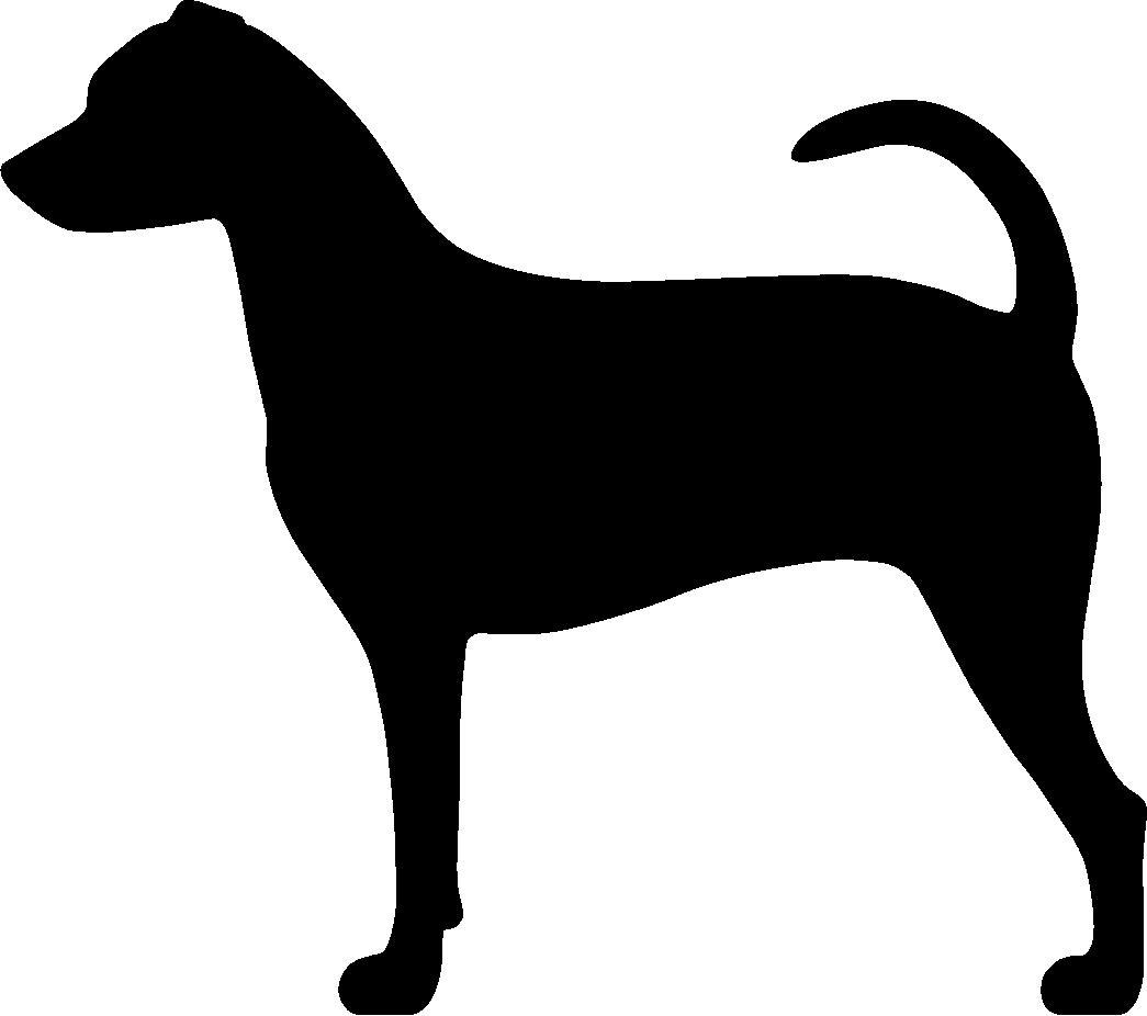 Brasilianterrieri