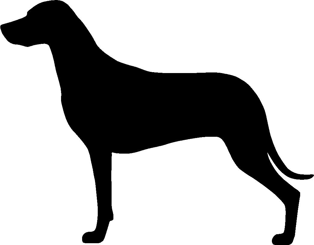 Rhodesiankoira